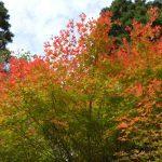Couleurs de l'automne - Jakuchikyô