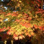 Corridor d'automne