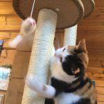 猫タワーNEW