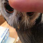 ラムネの鼻